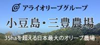 アライグループ 小豆島・三豊地区農場 35haを超える日本最大のオリーブ農場